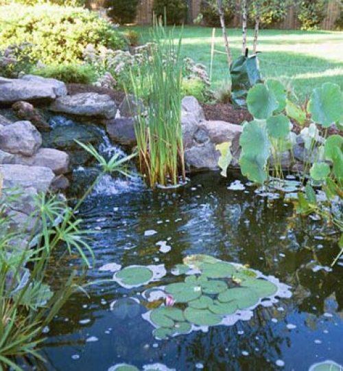 13#Baumann pond2